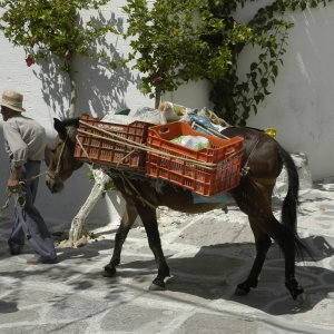 Dans les ruelles de Paros