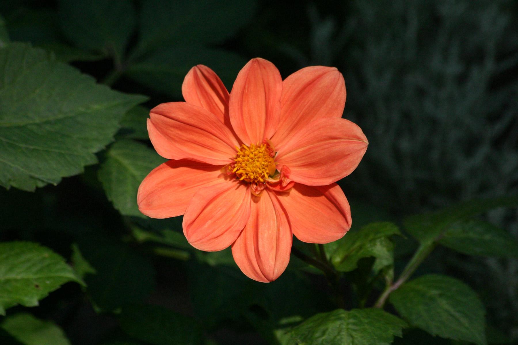 fleur orange sur freemages. Black Bedroom Furniture Sets. Home Design Ideas