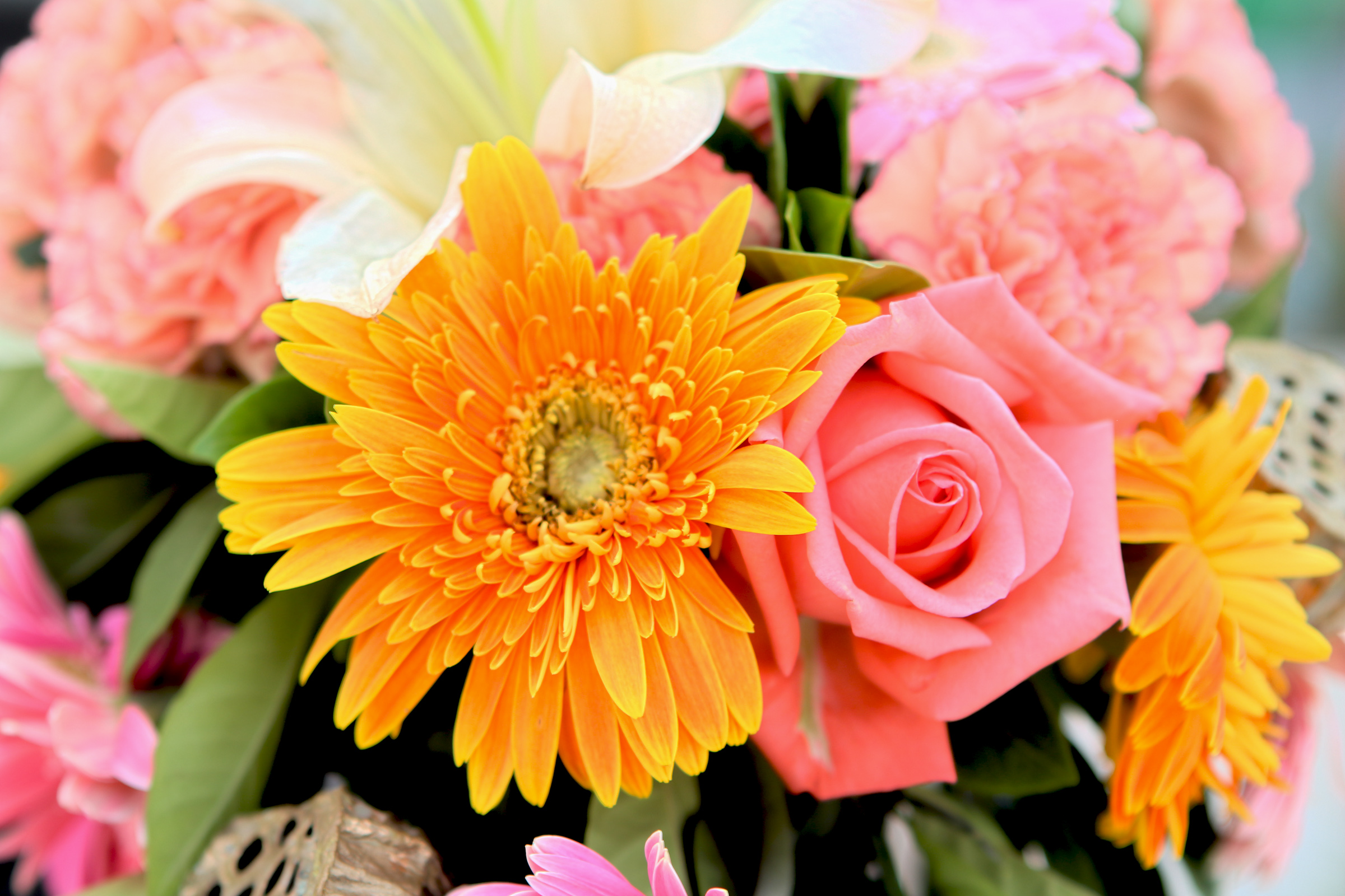 Composition florale sur freemages - Video composition florale ...