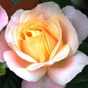 Rose Isabelle Autissier