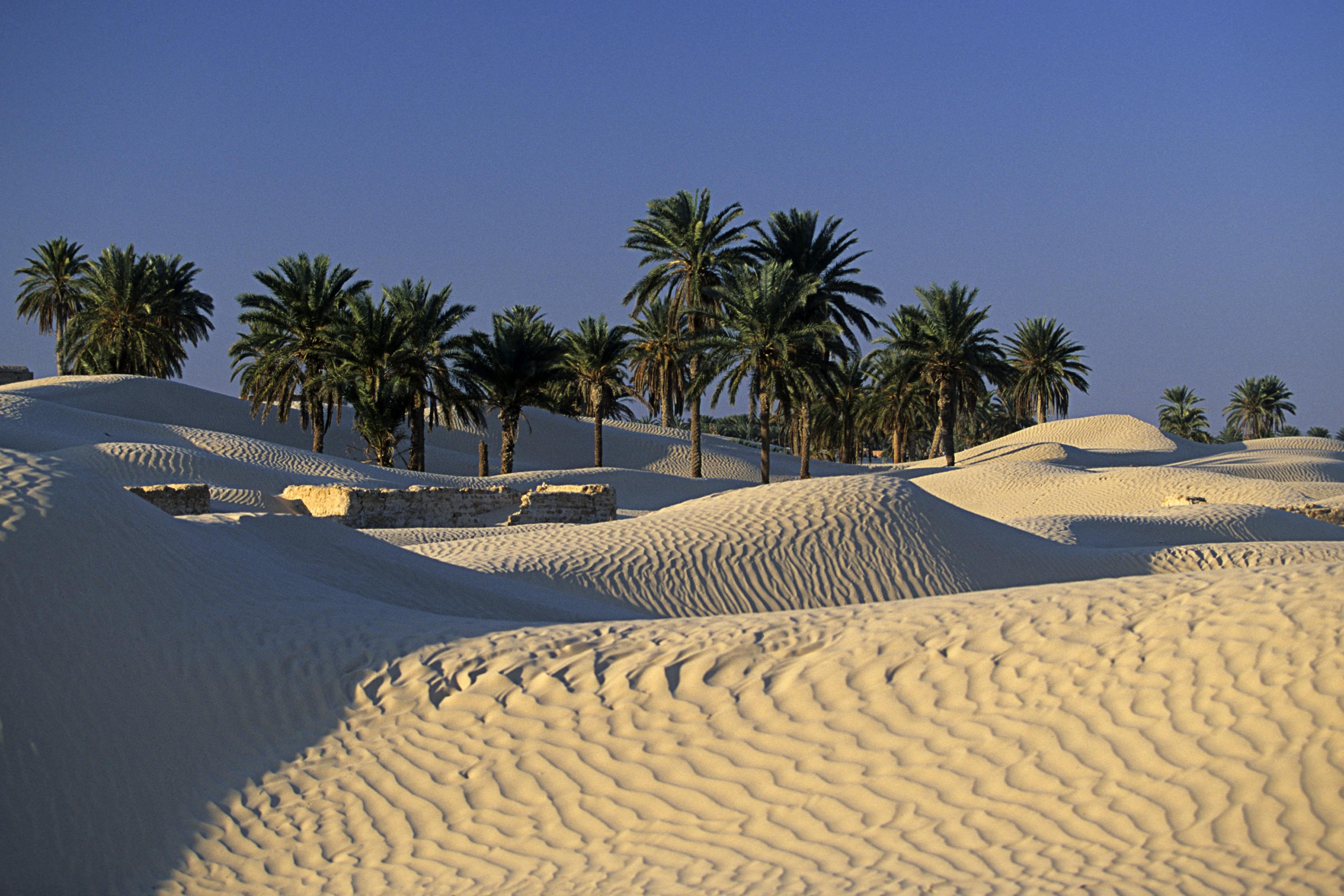 Album tunisie douz les portes du désert à douz