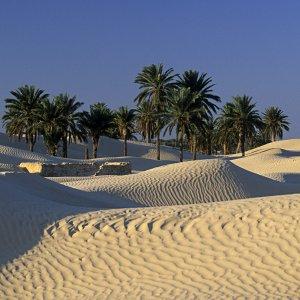 Les portes du désert à Douz